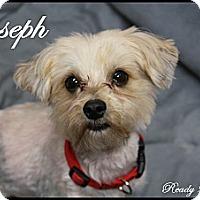 Adopt A Pet :: Joseph - Rockwall, TX