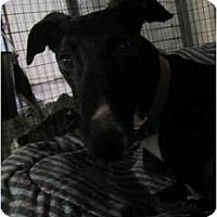 Adopt A Pet :: Falondria (Falondria Walker) - Chagrin Falls, OH