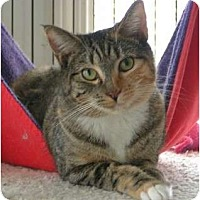 Adopt A Pet :: Libby - Monroe, GA