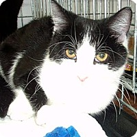Adopt A Pet :: Elvis - Germansville, PA