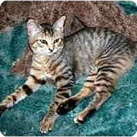 Adopt A Pet :: Leizel - Arlington, VA