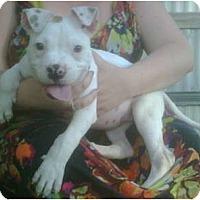 Adopt A Pet :: Louis - Killen, AL
