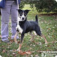 Adopt A Pet :: Max - Springfield, IL