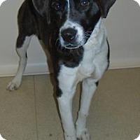 Adopt A Pet :: Lola - Gary, IN