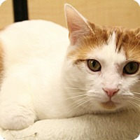 Adopt A Pet :: Freckles - Richmond, VA