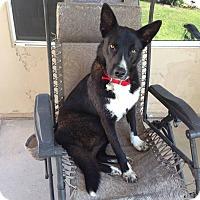 Adopt A Pet :: Nadia - Phoenix, AZ