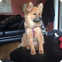 Adopt A Pet :: Appalachia - Shelter Island, NY
