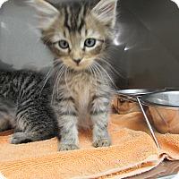 Adopt A Pet :: Hocus - Athens, GA