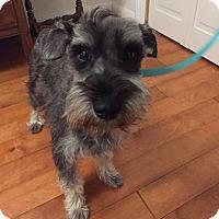 Adopt A Pet :: Harper - Redondo Beach, CA