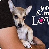 Adopt A Pet :: Carter - Mesa, AZ