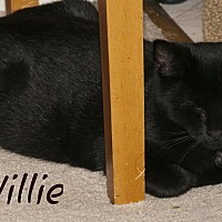 Adopt A Pet :: Willie - Waynesville, NC
