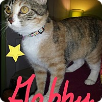 Adopt A Pet :: Gabby - Glendale, AZ