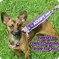 Adopt A Pet :: Panchita - Huddleston, VA