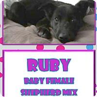 Adopt A Pet :: Ruby - Hanover, PA