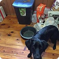 Adopt A Pet :: Princess - Staunton, VA