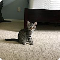 Adopt A Pet :: Tabitha - Reston, VA