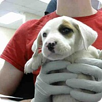 Adopt A Pet :: MAYBELINE - Conroe, TX