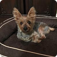 Adopt A Pet :: Soprano - Waipahu, HI
