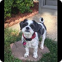 Adopt A Pet :: Ollie - LEXINGTON, KY