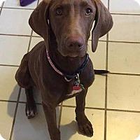 Adopt A Pet :: Paisley - Spring, TX