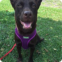 Adopt A Pet :: Brownie - Sunnyvale, CA