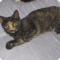 Adopt A Pet :: Nancy - Newtown, CT