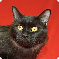 Adopt A Pet :: Betty - Jackson, MI