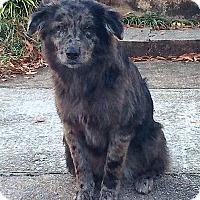 Adopt A Pet :: Matilda - Coming soon! - Ascutney, VT
