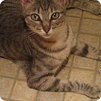 Adopt A Pet :: Patty - St. Louis, MO