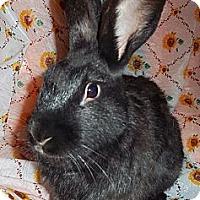 Adopt A Pet :: Brody - Santee, CA