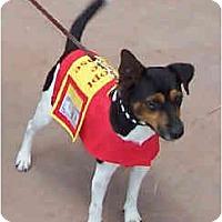 Adopt A Pet :: BOB - Phoenix, AZ