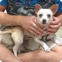 Adopt A Pet :: Randy - Modesto, CA