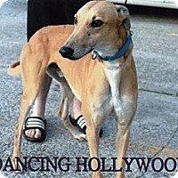 Adopt A Pet :: Dancing Hollywood - Vidor, TX