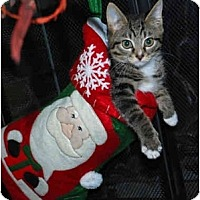 Adopt A Pet :: Cookie Monster - Colmar, PA