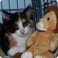 Adopt A Pet :: Callie - Stafford, VA