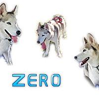 Adopt A Pet :: Zero - Seminole, FL