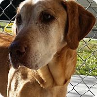 Adopt A Pet :: Sam - Bedford, TX