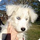Adopt A Pet :: Elsa