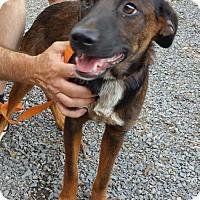 Adopt A Pet :: Penny - Albemarle, NC