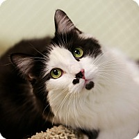 Adopt A Pet :: Jean Pierre - Kettering, OH