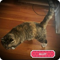 Adopt A Pet :: Alley - Fairborn, OH