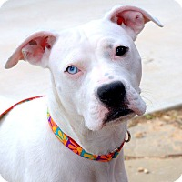 Adopt A Pet :: Marbles - College Station, TX