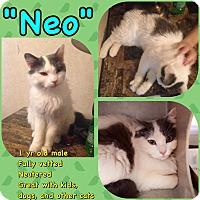 Adopt A Pet :: Neo - Salisbury, NC