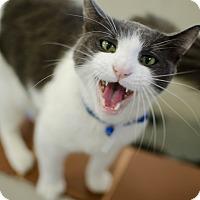 Adopt A Pet :: Gatsby - Greenwood, SC