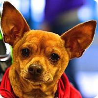 Adopt A Pet :: Jimmy - Fairfax Station, VA
