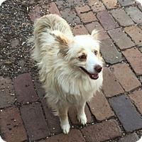 Adopt A Pet :: Riley - Elk River, MN