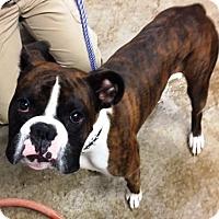 Adopt A Pet :: Wilbur - Oswego, IL