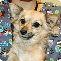 Adopt A Pet :: Foxy - Wildomar, CA
