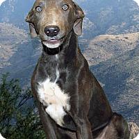 Adopt A Pet :: Earl - Tucson, AZ