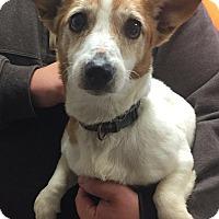Adopt A Pet :: Daizy - Morehead, KY